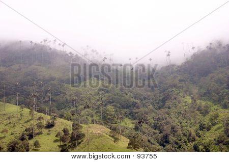 Andes Paramo