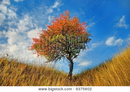 Lone Tree In The Fall Time