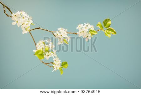 Spring Flowering Branch In Muted Colors