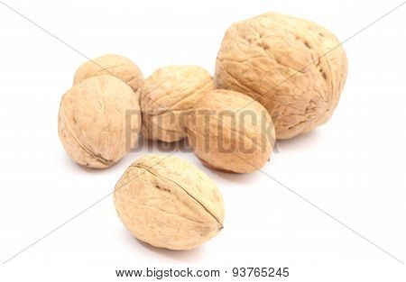 Brown And Fresh Walnuts On White Background