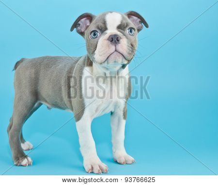 Puppy Blues