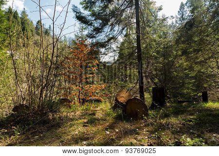 Beautiful autumn forest,
