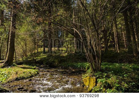 Beautiful forest landscape. Mountain forest.