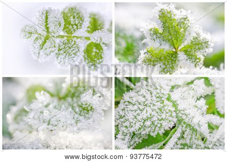 Thematic business card set or visiting card set. Hoarfrost on leaves.