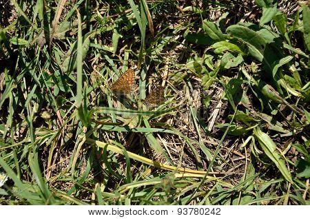 Butterflies' Play