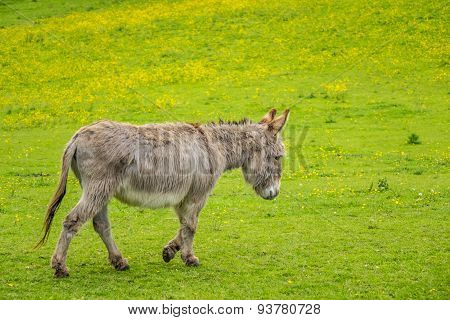 Donkey on a meadow