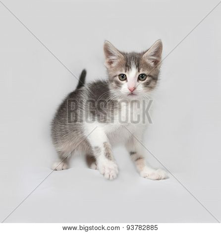 Small White And Tabby Kitten Standing On Gray