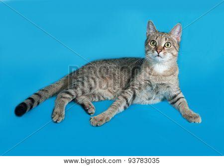 Grey Tabby Cat Sitting On Blue