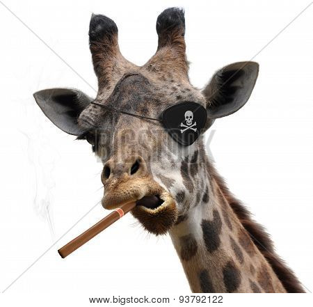Awesome giraffe with a pirate eyepatch and a big cigar