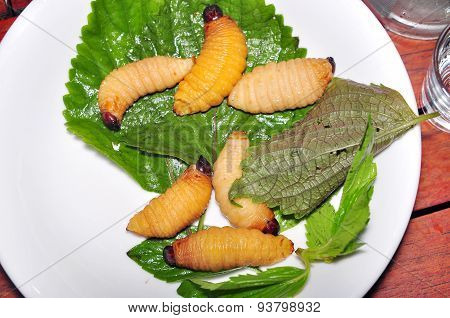 Red Palm Weevil Larva or Coconut worm