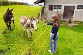 stock photo of donkey  - Cute little girl feeds donkey in a farm - JPG