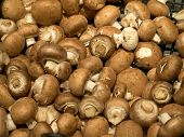 picture of champignons  - Fresh brown champignon mushroom on display for sale in a store - JPG