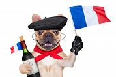 image of french beret  - french bulldog with red wine and beret hat isolated on white background waving a flag of france - JPG