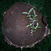 image of honeysuckle  - Honeysuckle branch with berries - JPG