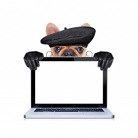 image of beret  - french bulldog with beret hat isolated on white background hiding behind laptop pc computer screen and keyboard - JPG