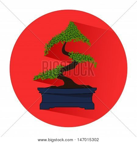 Bonsai isolated on red circle. Icon. In the flat style.