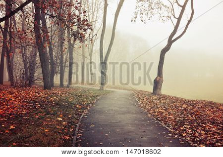 Autumn nature -misty autumn view of deserted autumn park alley in dense fog - foggy autumn landscape in vintage tones with bare autumn trees and dry fallen leaves. Autumn alley in dense autumn fog.