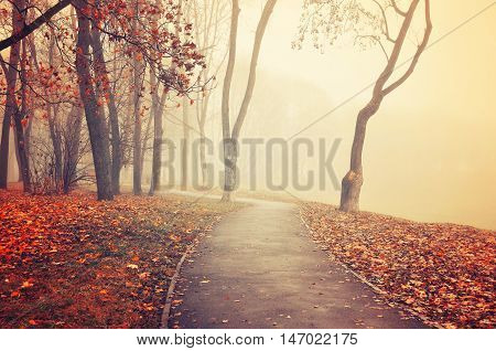 Autumn view-foggy autumn park alley with bare autumn trees and fallen autumn leaves.Lonely walkway in the autumn deserted park in the fog- autumn colored landscape. Vintage and creative filter applied