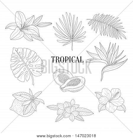 Tropical Fruits And Plants Assortment Hand Drawn Realistic Sketch. Hand Drawn Detailed Contour Illustration On White Background.
