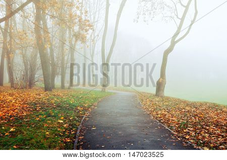 Autumn nature -foggy autumn deserted alley. Autumn park alley in dense fog- foggy autumn landscape of lonely alley with bare autumn trees and orange fallen leaves. Autumn alley in dense autumn fog.