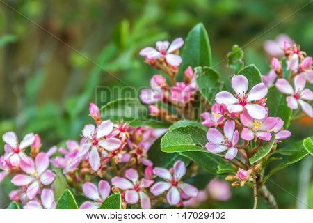 fresh flowers on green background
