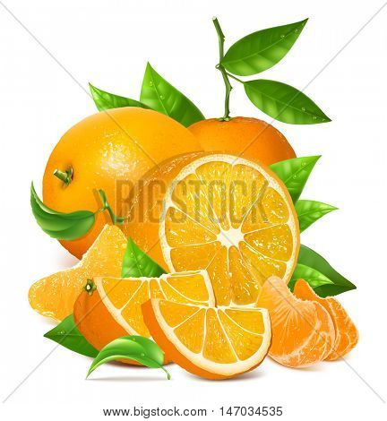 Fresh ripe oranges and tangerines with leaves. Fully editable handmade mesh. Vector illustration.