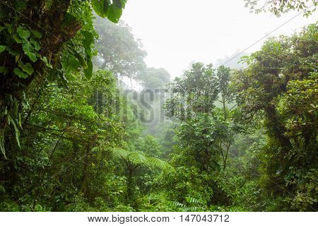 Misty rainforest in Monteverde cloud forest reserve Costa Rica