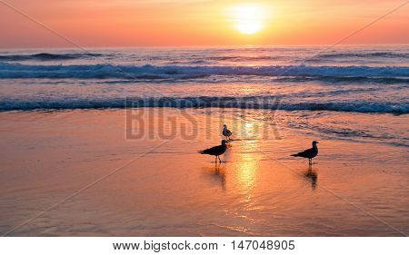 Sunset at the beach in Portugal