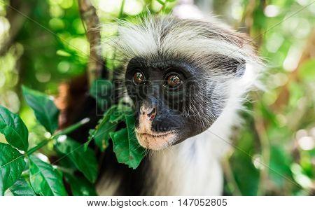 funny little african monkey on green tree
