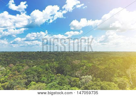 Aerial view of the Amazon Rainforest, Brazil