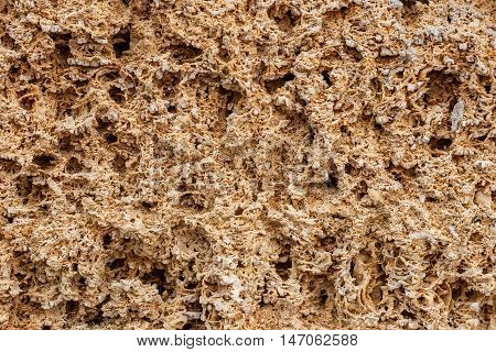 Background. The texture of limestone and lime close up. Formed by sedimentary rocks.