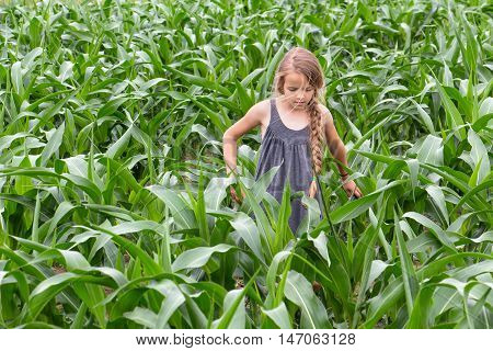 Little farmer girl inspecting the growing corn in spring or summer time