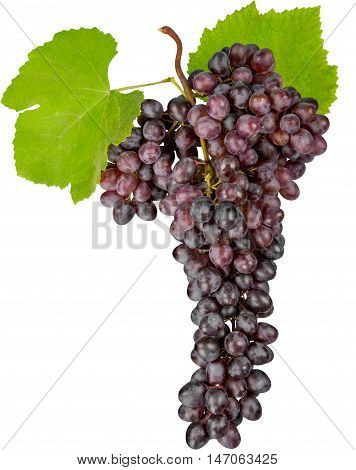 Red Grape Cluster With Leaves - Isolated