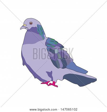 Illustration of colorful bird homing pigeon isolated on white background