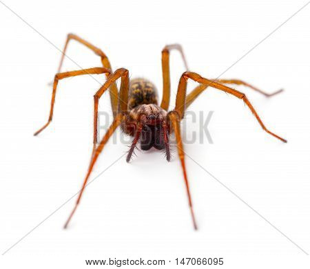 one Spider on a isolated white background