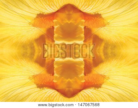 A macro shot of a yellow flower in a mirror image pattern.