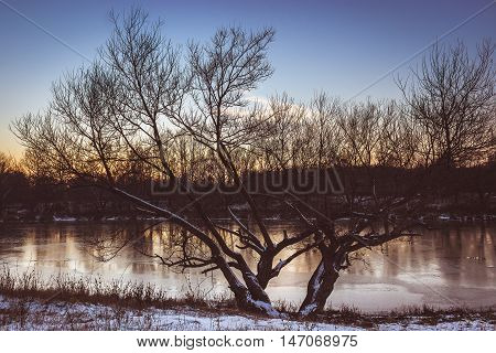 Tree And A Frozen River Russian Federation