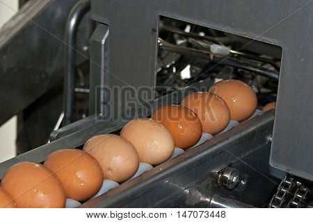 Eggs coming from the transmission line and directed the production line (automatic breaking and training mix)