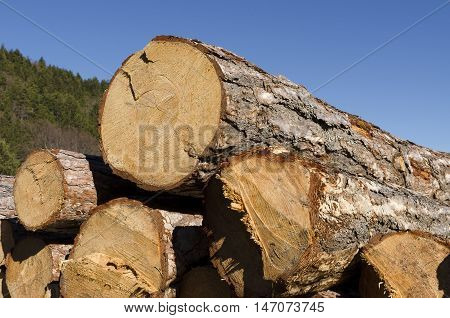 Stack of coniferous timber in the Rhodope Mountain