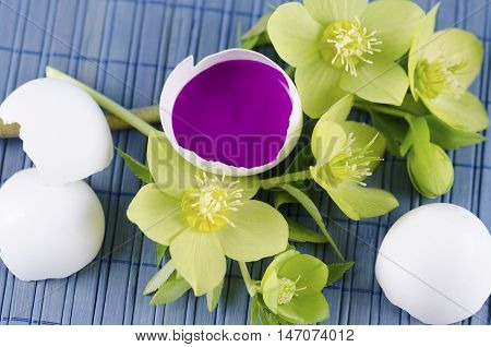 Easter decoration with hellebore and egg shell with magenta tempera paint
