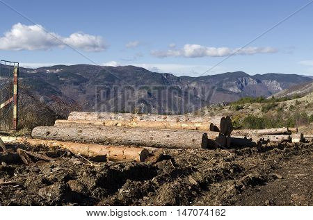 Coniferous stack on a mountain hill and mud
