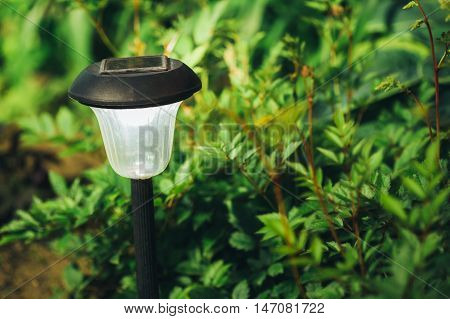 Beautiful Small Solar Garden Light, Lanterns In Flower Bed. Garden Design. Solar Powered Lamp