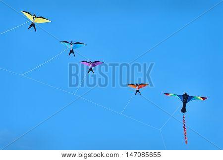 Bird Kites Blue Sky. Kites in the shape of birds soar in the blue sky.