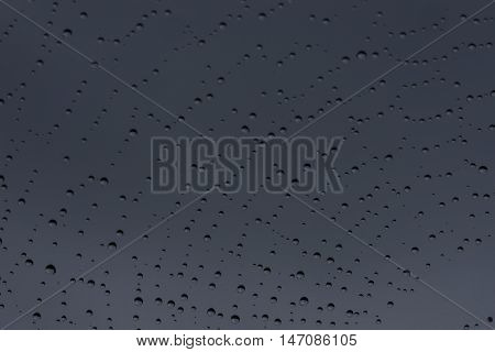 Cobweb and morning dew. Shining water drops on spiderweb gray background