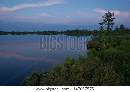 Summer on the bog lake. Forest and sky reflection in the swamp