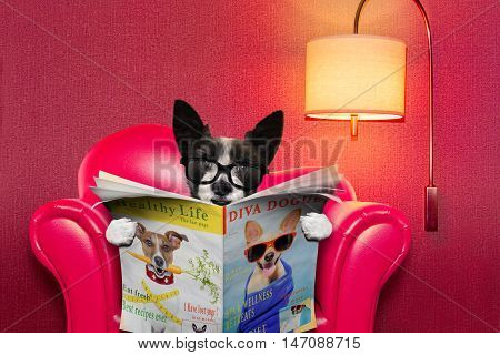 Dog Reading Newspaper At Home