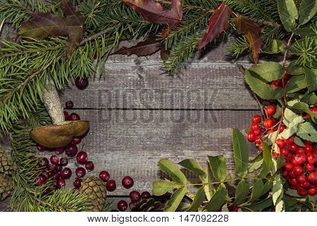 frame of autumn fruits, mountain ash, cranberries and leaves