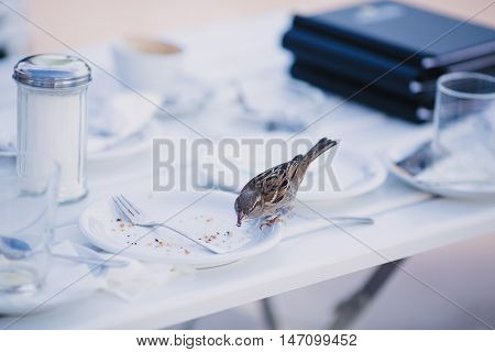 Bird sits on the edge of a plate and eats crumbs
