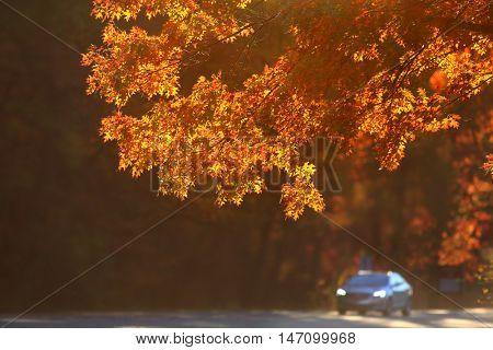 Scenic autumn drive in Michigan rural side