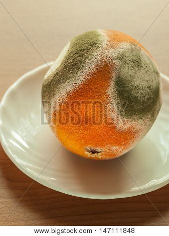 Moldy grapefriut on plate at wooden table. Unhealthy and rotten fruit.